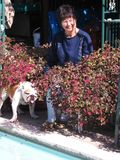 Loropetalum katie and lucky pool